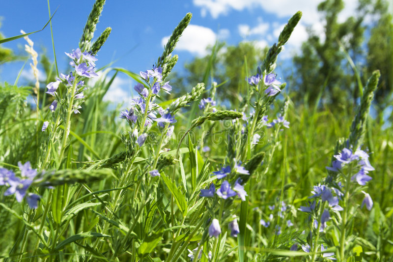 Gevoelige wildflowers royalty-vrije stock afbeeldingen