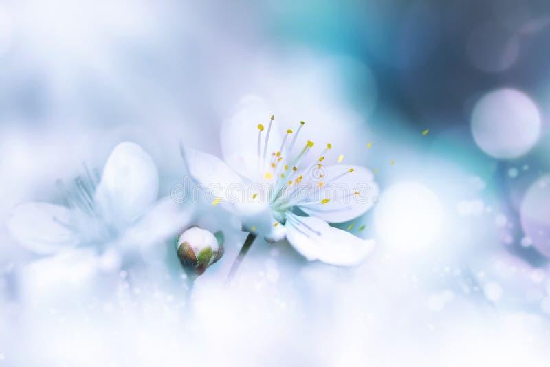 Gevoelige witte kersenbloemen Artistiek macrobeeld De achtergrond van de de lentezomer Vrije ruimte voor tekst royalty-vrije stock fotografie