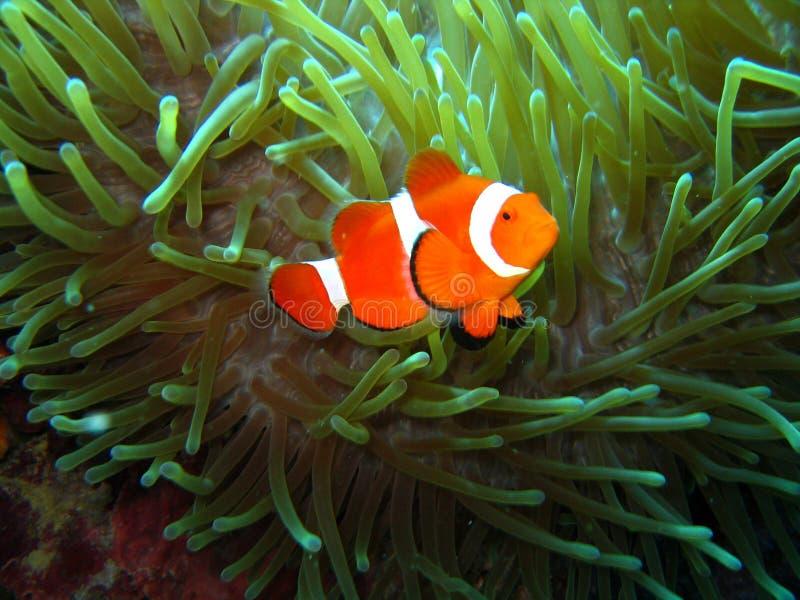Gevonden Nemo stock afbeelding