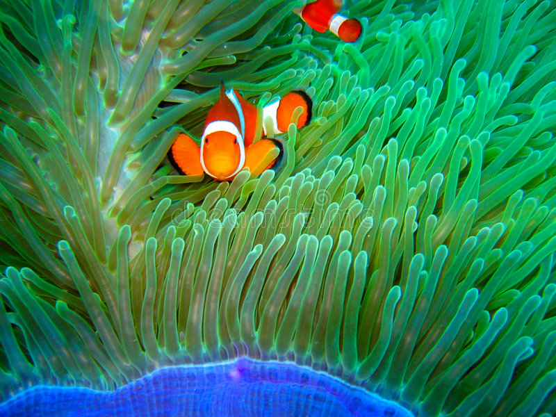 Gevonden Nemo royalty-vrije stock afbeelding