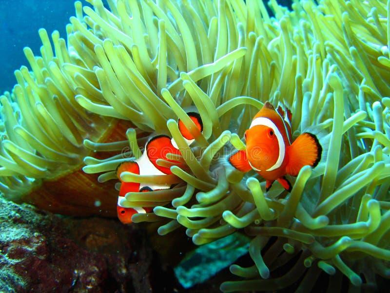 Gevonden Nemo royalty-vrije stock fotografie