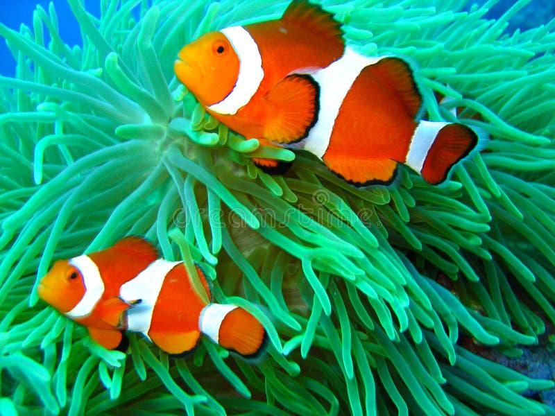 Gevonden Nemo royalty-vrije stock afbeeldingen