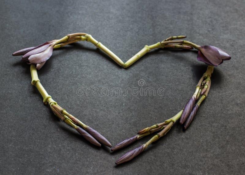 Gevormde het hart bloeit kroon van Frangipani-bloemknoppen royalty-vrije stock foto