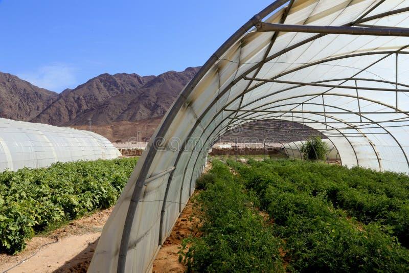 Gewächshäuser in der Wüste lizenzfreie stockbilder
