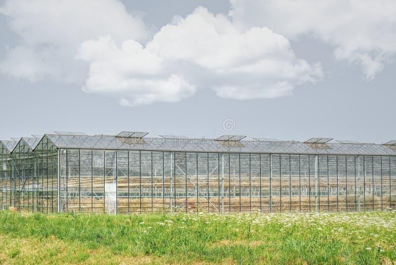 Gewächshäuser für wachsende vetetables mit trockener Ernte lizenzfreie stockbilder