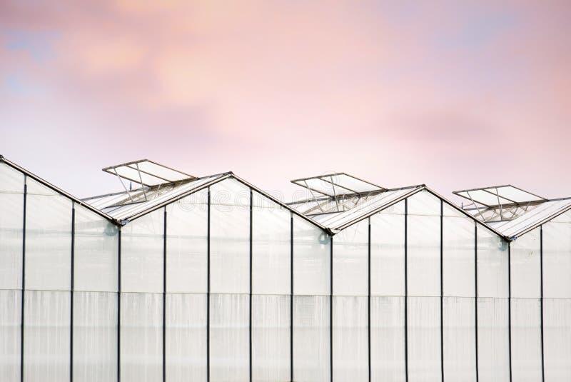 Gewächshäuser mit aufrechten Oberlichtern und schönem rosa Himmel stockbilder