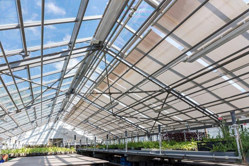Gewächshaus im botanischen Garten nach innen mit Vielzahl von Anlagen und stockbild