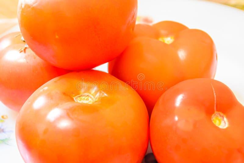Gewächshaus-Tomate von Marmara-Region - die Türkei lizenzfreies stockbild