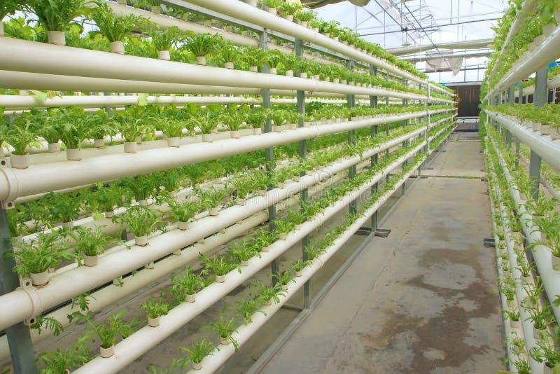 Gewächshausgemüseanbau ohne Boden stockbilder