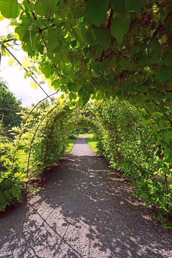 Gewölbte Gasse im Garten lizenzfreie stockfotografie