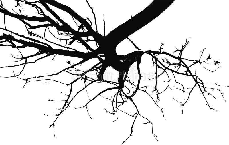 Gewölbte Zweige stock abbildung
