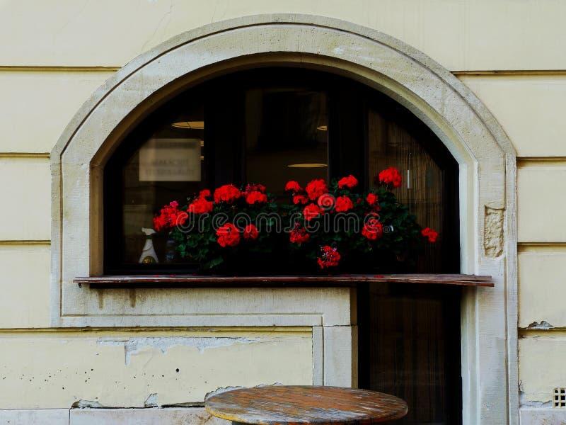 Gewölbtes Restaurantfenster mit verfallender Schwelle und roten Pelargonien stockfotos