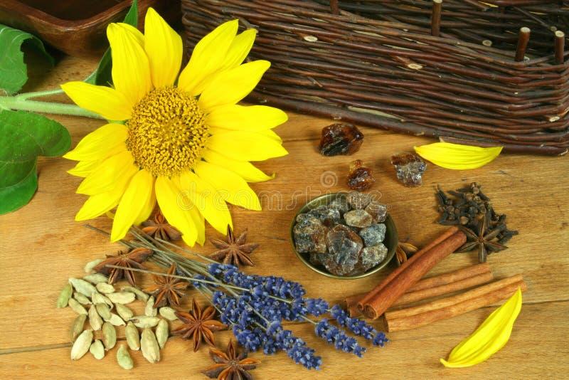 Gewürze und Sonnenblume stockfotos