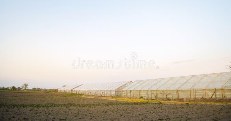 Gew?chsh?user auf dem Gebiet f?r S?mlinge von Ernten Wachsendes organisches Gem?se Leihen zu den Landwirten Ackerlandlandwirtscha stockfotografie