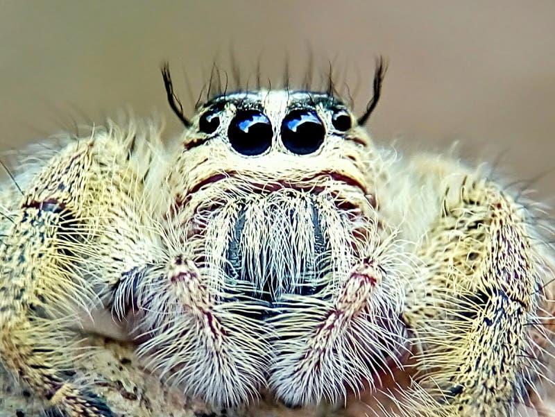 Gewaagd insect royalty-vrije stock fotografie