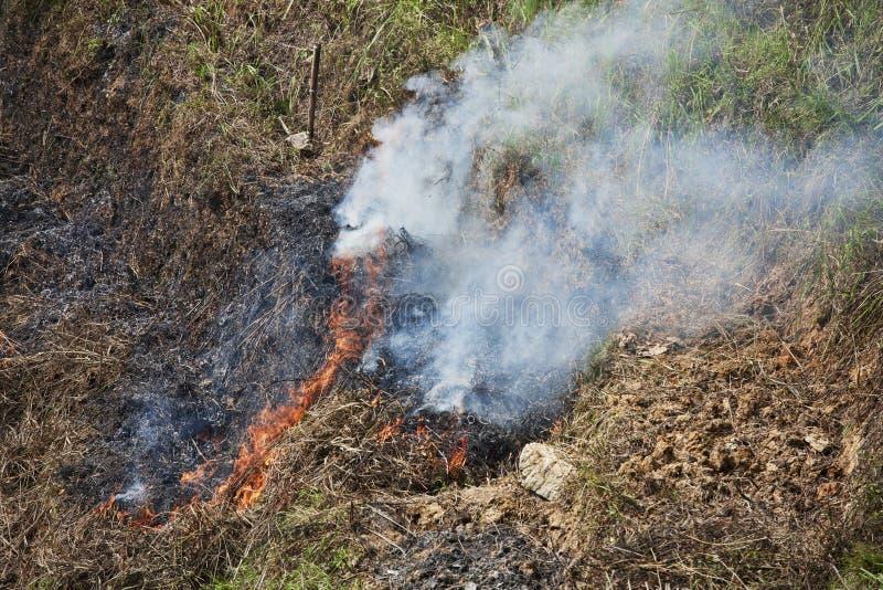 Gewas het Branden stock foto's