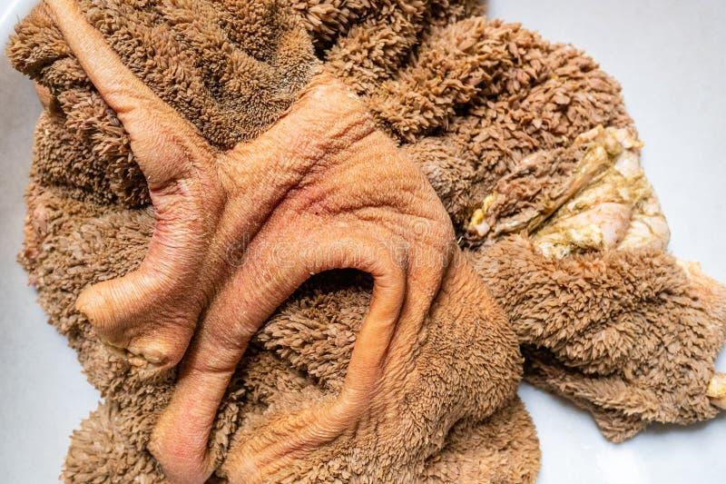 Gewaschene rohe Rindfleischkaldaunen im Becken lizenzfreie stockfotos