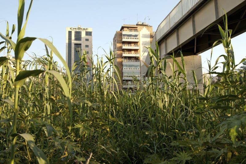 Gewassen die onder een brug, Libanon groeien stock afbeelding
