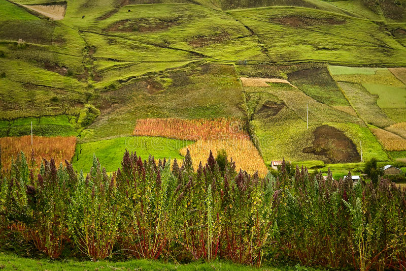 Gewassenaanplantingen in Riobamba, Ecuador royalty-vrije stock fotografie