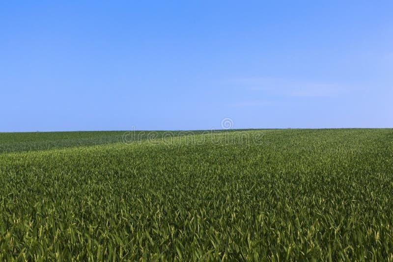 Download Gewassengebied stock afbeelding. Afbeelding bestaande uit kleurrijk - 39106673