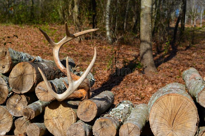 Geweitakken die op een stapel van brandhout rusten stock foto's