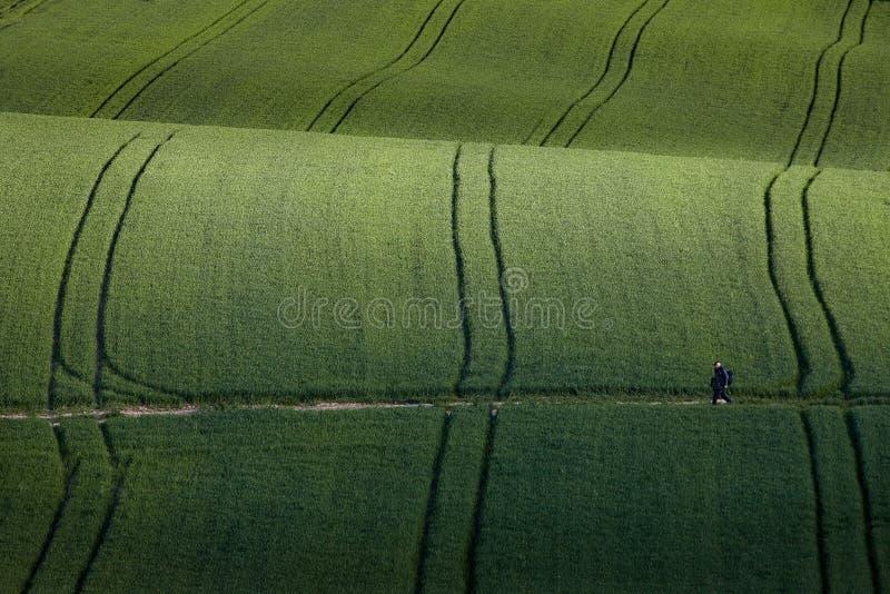 Gewellte Felder, Märchenmuster, Polen stockfotos