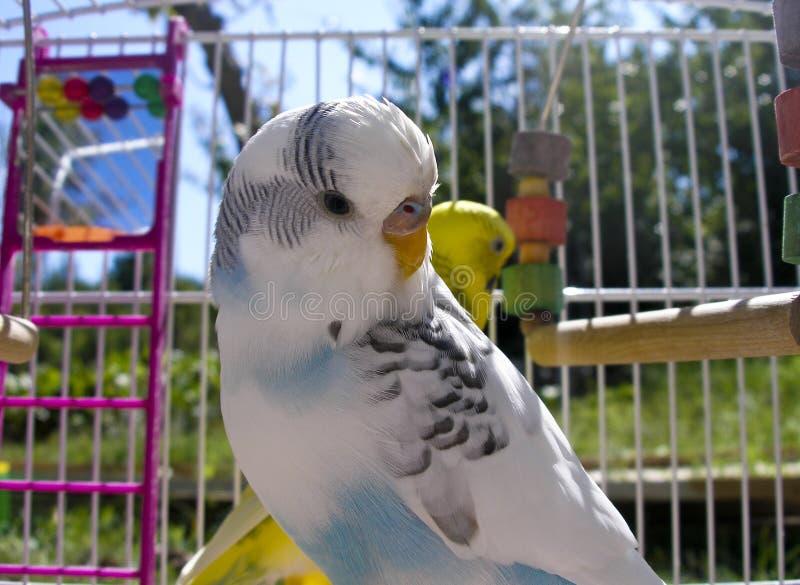 Gewellter Papagei stockbilder