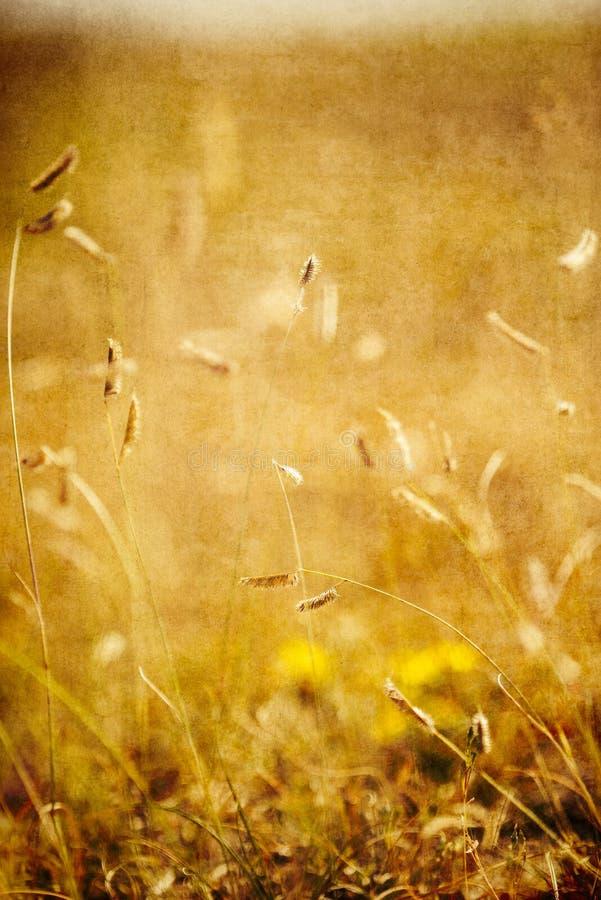 Geweven Achtergrondbuffelsgras op Pawnee royalty-vrije stock fotografie