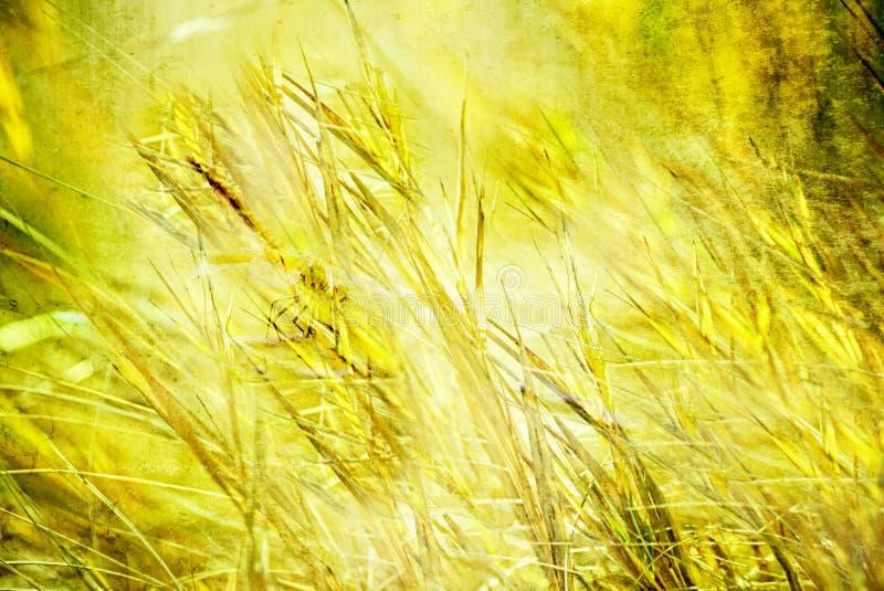 Geweven Grasachtergrond met Libel vector illustratie