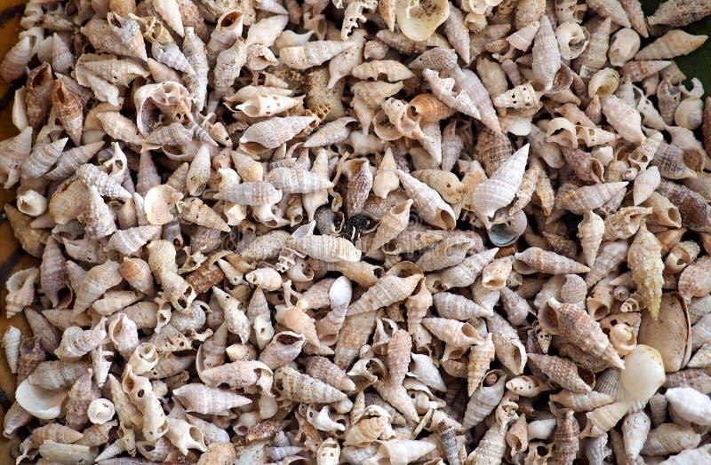 Geweven massa's van overzeese shells, stock fotografie