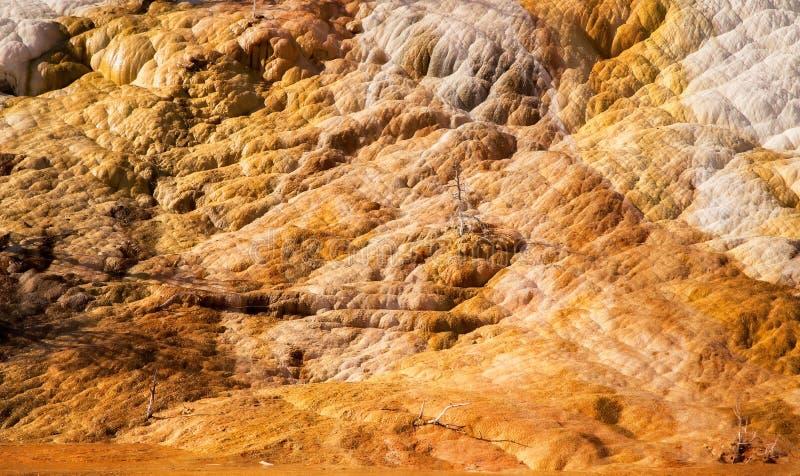 Geweven opbouw op een rots bij Mammoetdalingen stock afbeelding