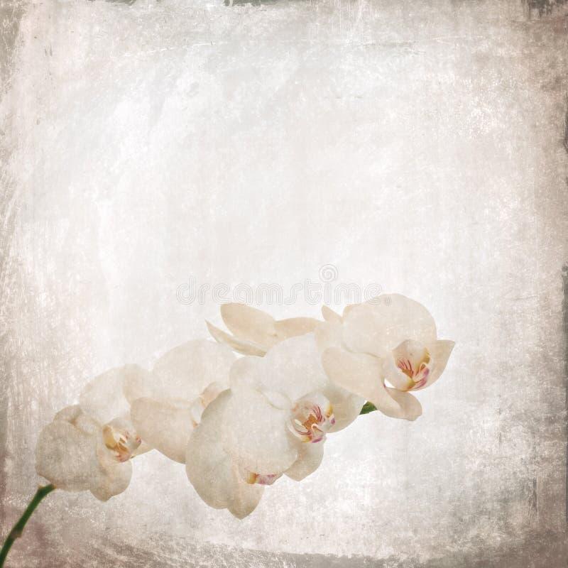 Geweven oude document achtergrond met witte en magenta phalaenopsis stock afbeeldingen
