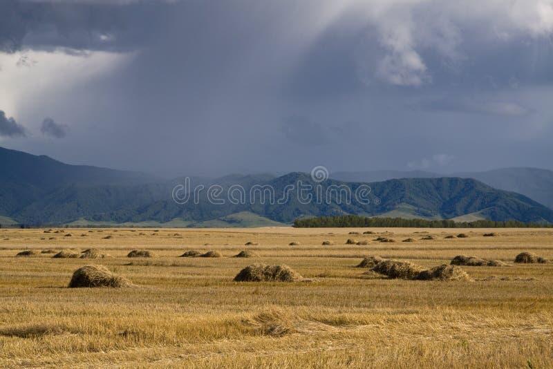 Gewitter über einem Feld stockfoto