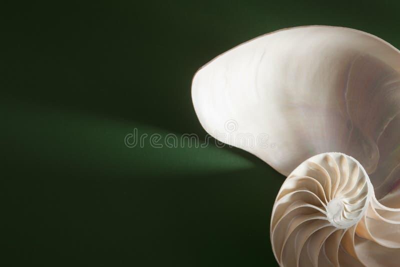 Gewundenes Shellkapitel des Nautilus lizenzfreie stockfotografie