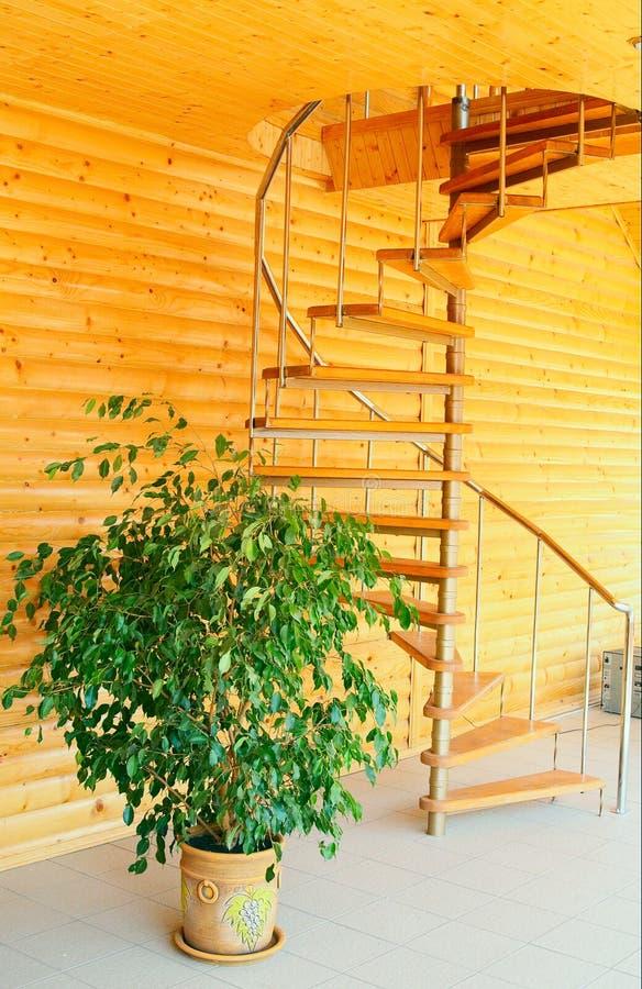Gewundenes Treppenhaus und Ficus. lizenzfreies stockbild