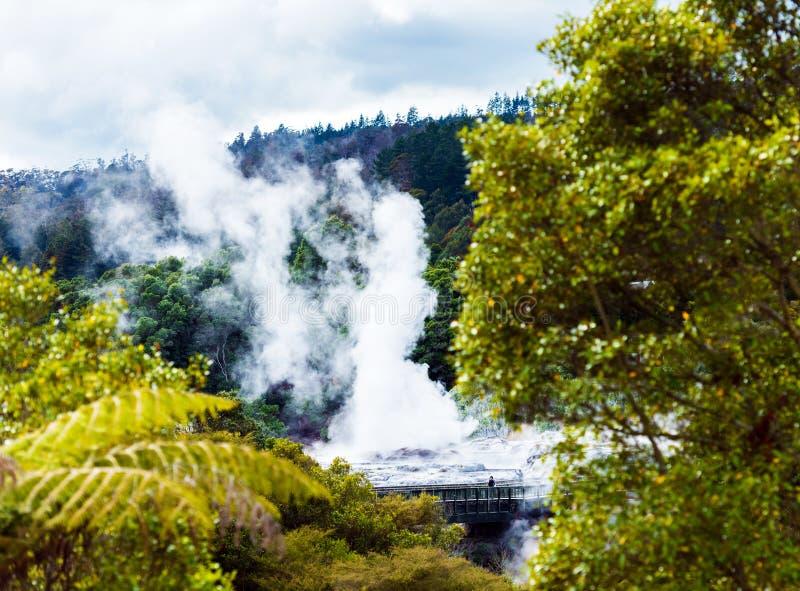Geyser de Pohutu, Te Puia, Rotorua, Nouvelle-Zélande images libres de droits