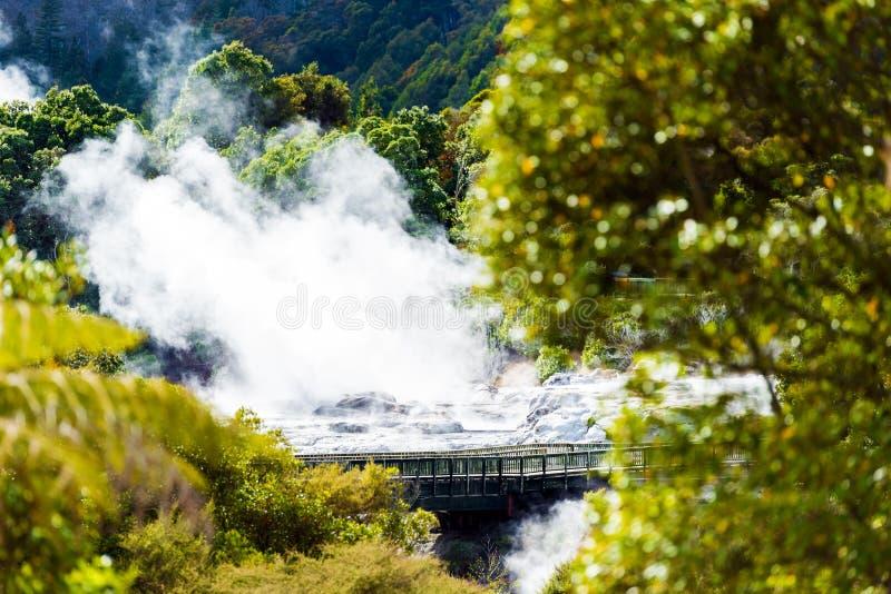 Geyser de Pohutu, Te Puia, Rotorua, Nova Zelândia imagem de stock royalty free