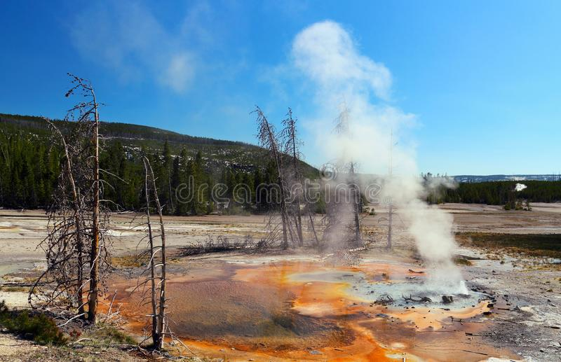 Geyser minuscule en Norris Geyser Basin, parc national de Yellowstone images stock