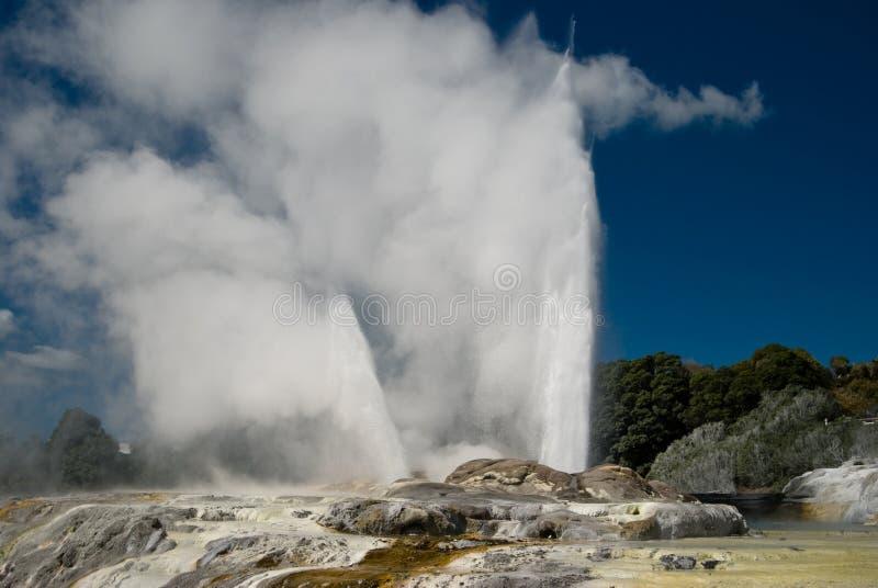 geyser pohutu στοκ εικόνες με δικαίωμα ελεύθερης χρήσης