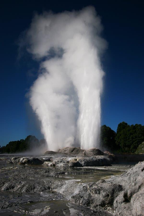 Geyser som får utbrott i Rotorua, Nya Zeeland fotografering för bildbyråer