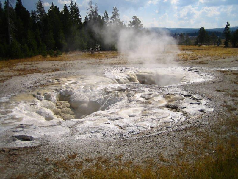 Geyser spasmodico situato nel bacino superiore del geyser, Yellowstone NP immagine stock libera da diritti