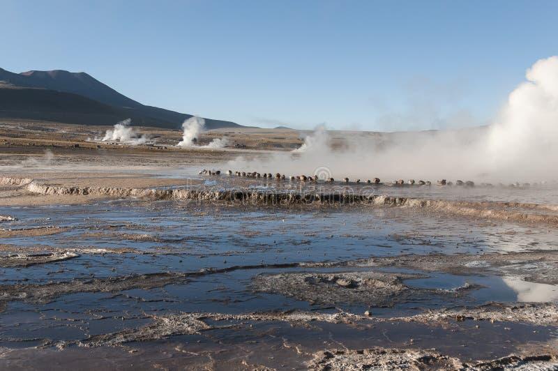 Geyserfield EL Tatio - Chile lizenzfreie stockfotos