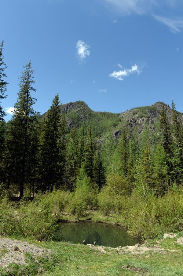 Geysernoemeer, dichtbij het dorp van Aktash, Ulagansky-District, Gorny Altai, Siberië, Rusland stock afbeeldingen