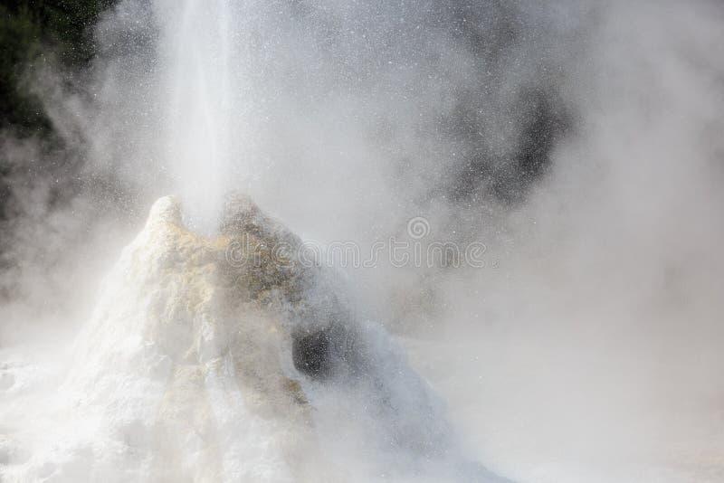 Geysir de Madame Knox au Nouvelle-Zélande photographie stock libre de droits