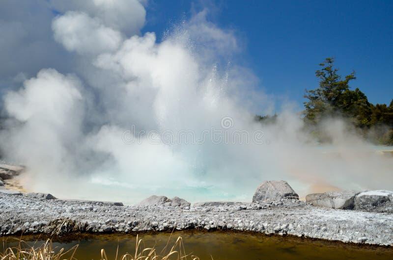 Geyzeruitbarsting bij het Thermische park van Wairakei royalty-vrije stock foto's