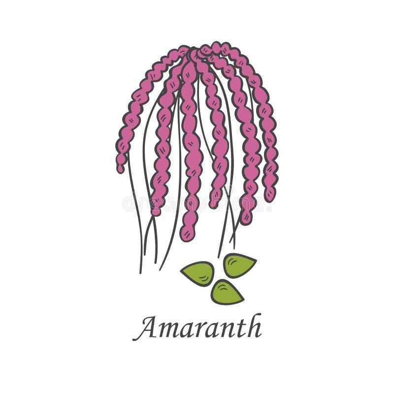 Gezeichnete Amarantikone der Vektorkarikatur Hand stock abbildung