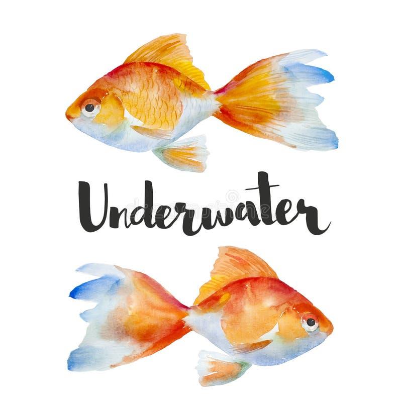 Gezeichnete Aquarell-gelbes Goldfische der hohen Qualität Hand auf einem weißen Hintergrund Unterwasser-Reihe lizenzfreie abbildung