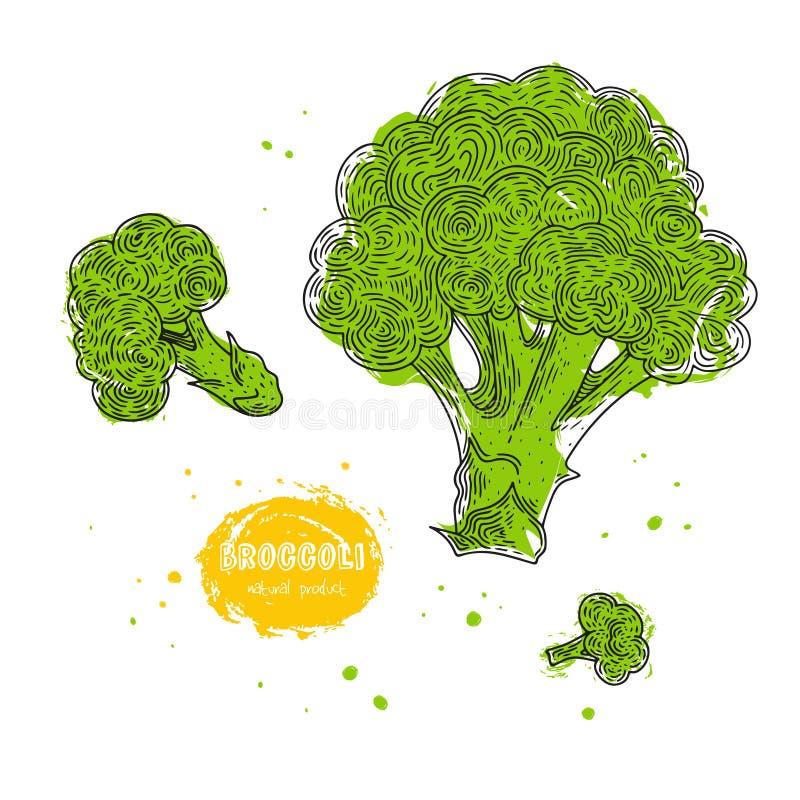 Gezeichnete Illustration des Vektorbrokkolis Hand im Stil des Stiches Ausführliche vegetarische Lebensmittelzeichnung Bauernhofma lizenzfreie abbildung