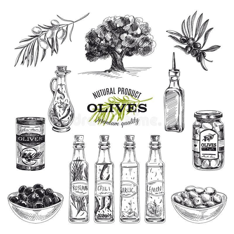 Gezeichnete Illustration des Vektors Hand mit Oliven und stock abbildung