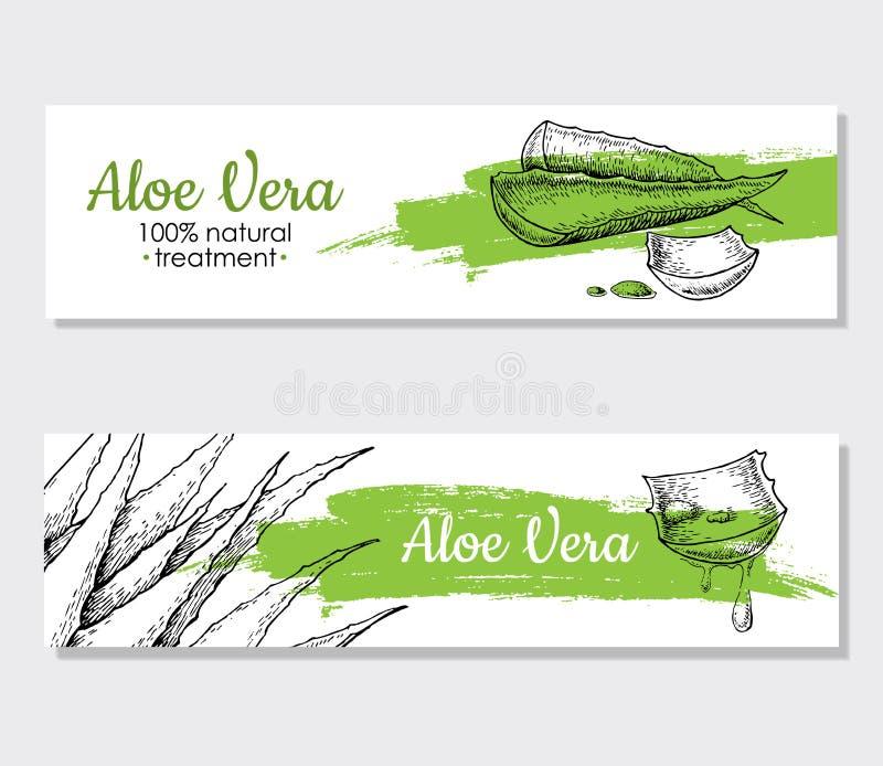 Gezeichnete Illustrationen Vektoraloe-Veras Hand Aloe-Vera-Fahne, Position vektor abbildung